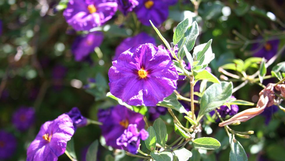 melanie-home-purple